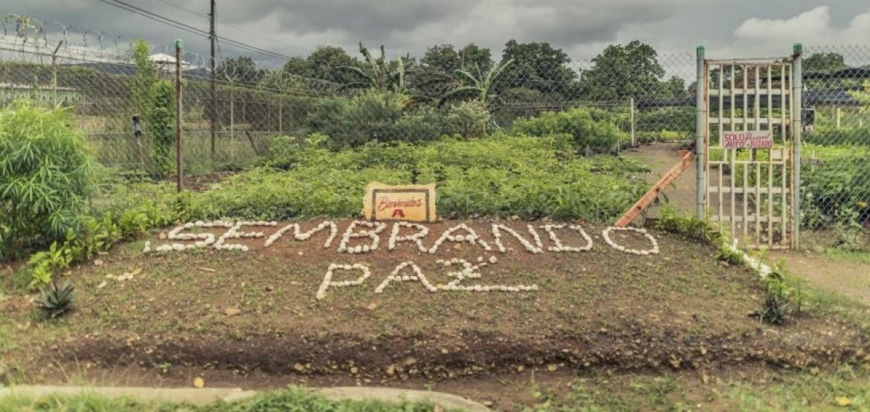 Sembrando Paz: el vivero que está reforestando vidas en la cárcel de La Joyita en Panamá
