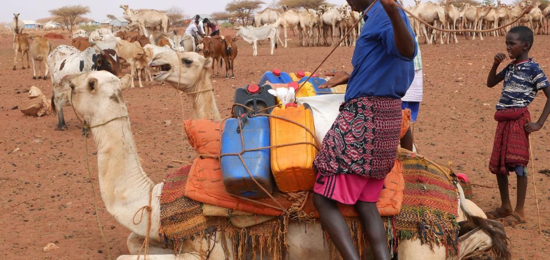 Somália: água corrente reúne pastores e seus rebanhos