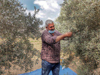 Climate Change Hits Gaza's Green Gold