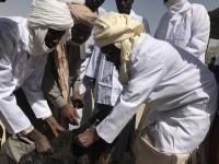 Tchad : Vaste campagne de vaccination de bétail pour 15 000 ménages du Lac Tchad