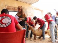 МККК: помочь людям сохранить доходы во время пандемии или получить рост зависимости от гуманитарной помощи