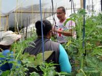 Huerta urbana une a comunidad que vive en medio de la violencia en Colombia