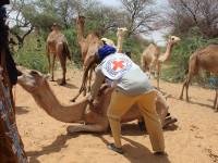 Niger : trois millions et demi d'animaux vaccinés