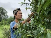 缅甸:忆及因地雷丧生的堂兄,拉敏痛苦不已