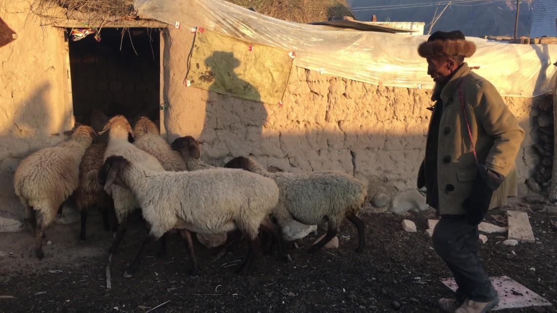 得益于生计项目的资金支持,年届70的吐尔逊那洪•苏热塔依开始养羊。一年来,羊群数量已经翻了一倍还多。CC BY-NC-ND / ICRC / Xiang Yongtao