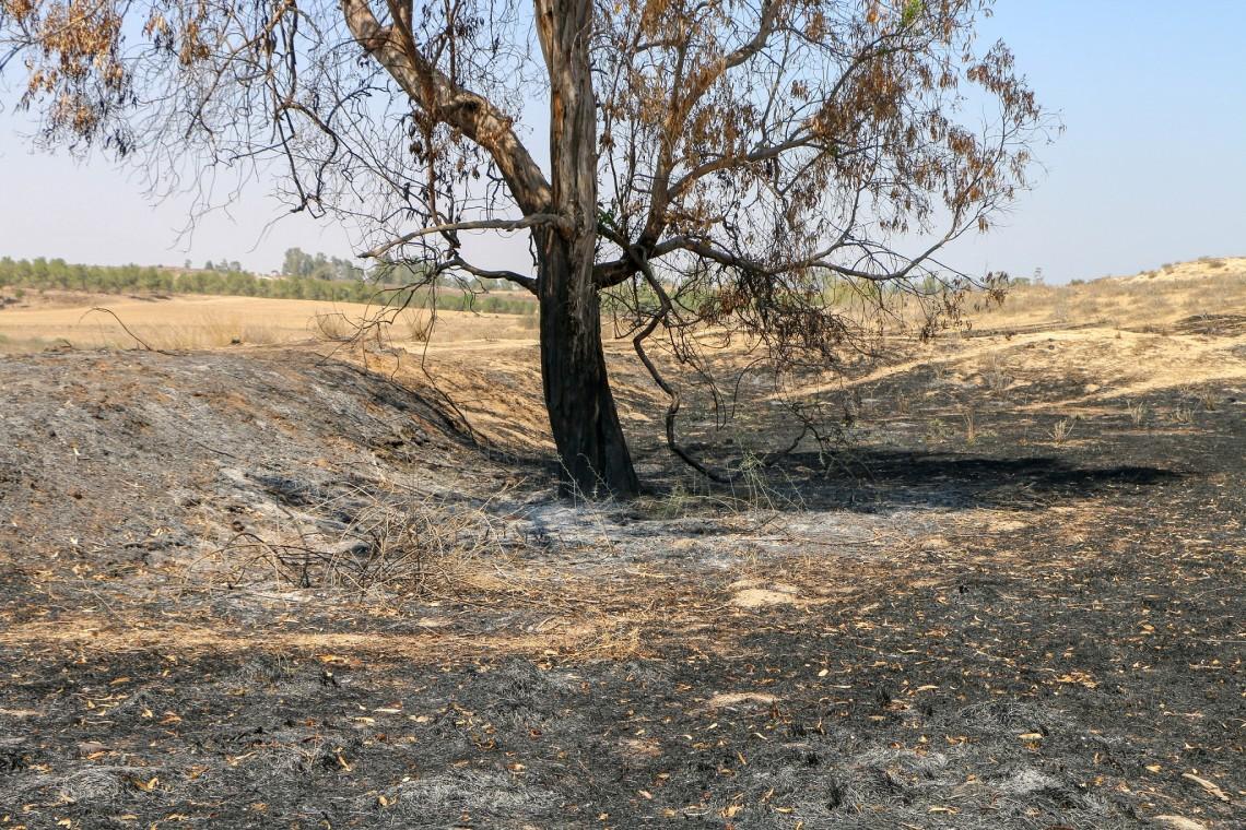حقل محترق قرب إحدى البلدات الإسرائيلية على الحدود مع قطاع غزة. BY-NC-ND / ICRC / SHAY DAVIDOVICHCC