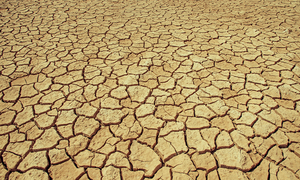 The land in Fao, Iraq is so dry that it is cracking. Mike Mustafa Khalaf | ICRC