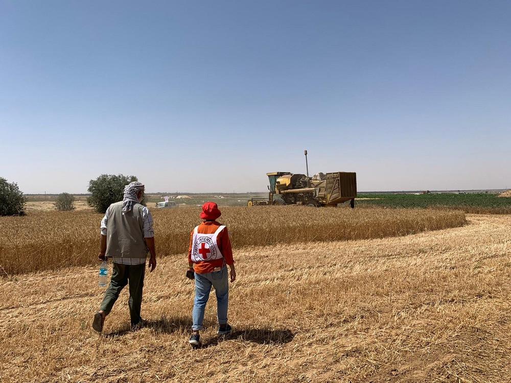 作为支持加沙农民的经济安全项目的一部分,红十字国际委员会的经济安全专家玛丽亚·戈蕾蒂·伊卡·里亚娜与一位农民讨论他所建造的省时且创新的收割机。 ICRC