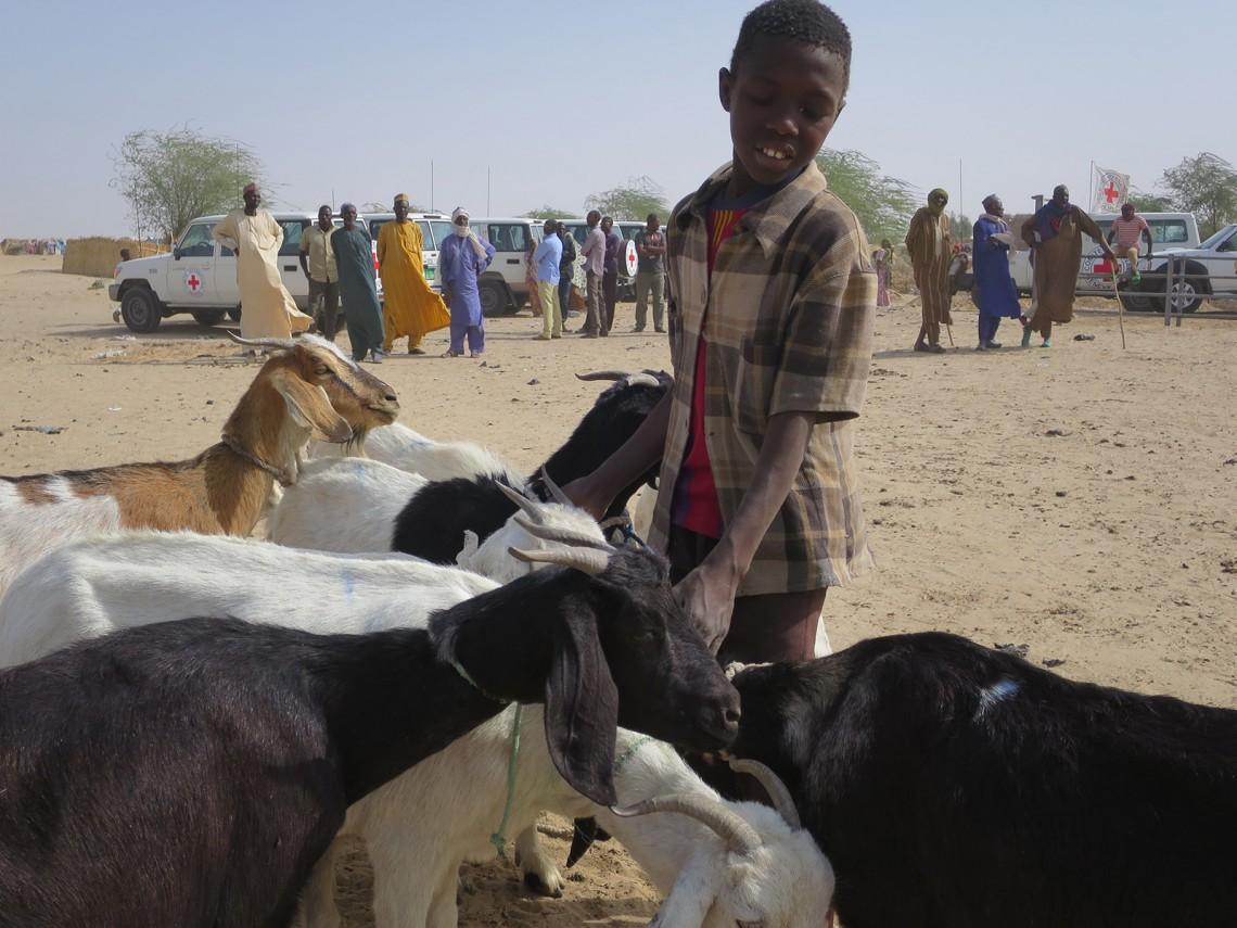 Bello Ousmane au milieu de son troupeau. CC BY-NC-ND / CICR