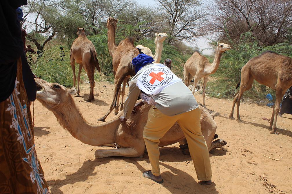 Séance de vaccination par une équipe d'agents vaccinateurs sur un site à Tillaberi. Alzouma Boubacar Amadou/CICR