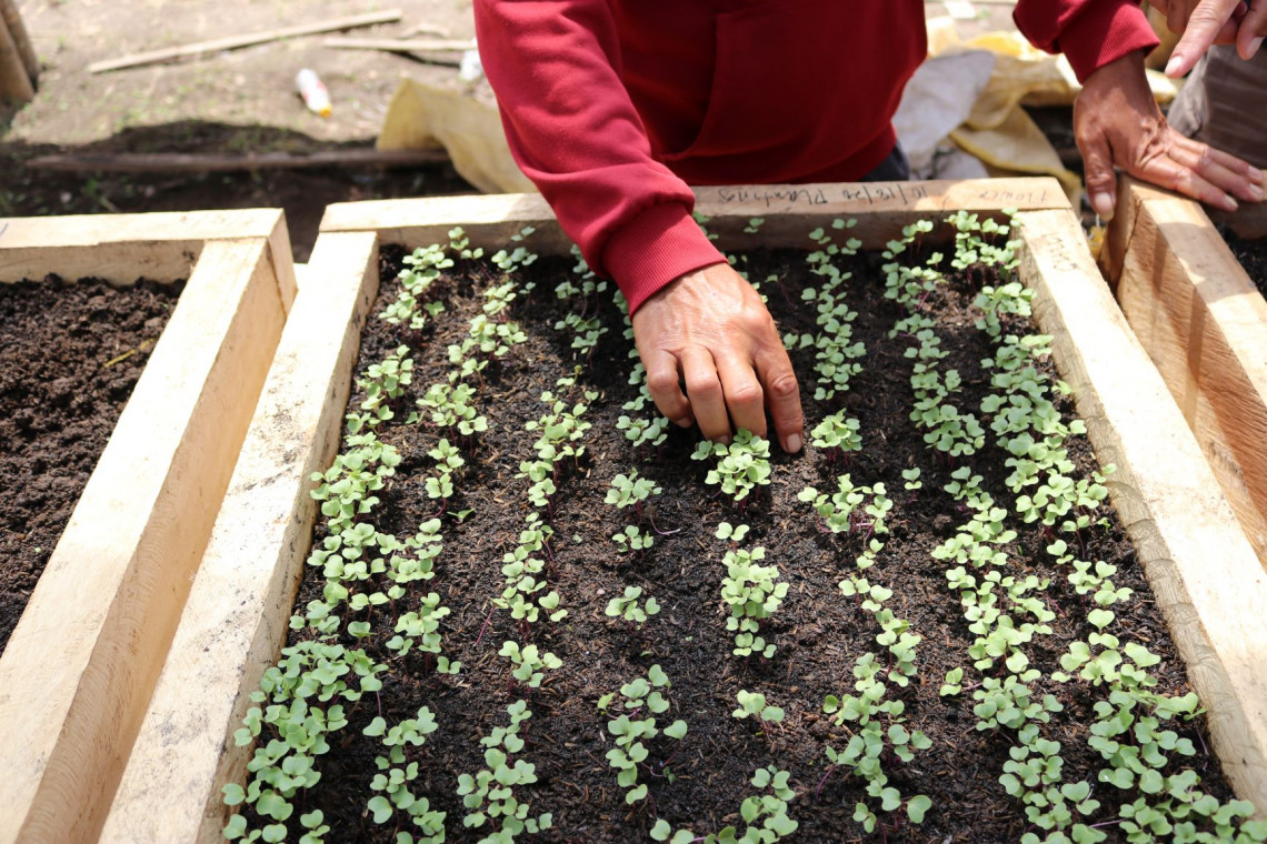 Philippines: Sowing seeds of hope
