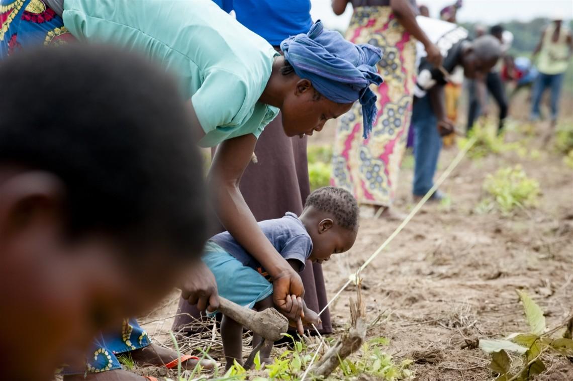 Image d'illustration: Kasaï-central, Kananga ville, quartier Plateau. Sous l'œil expérimenté des agronomes partenaires du CICR, les agriculteurs apprennent à débroussailler les champs