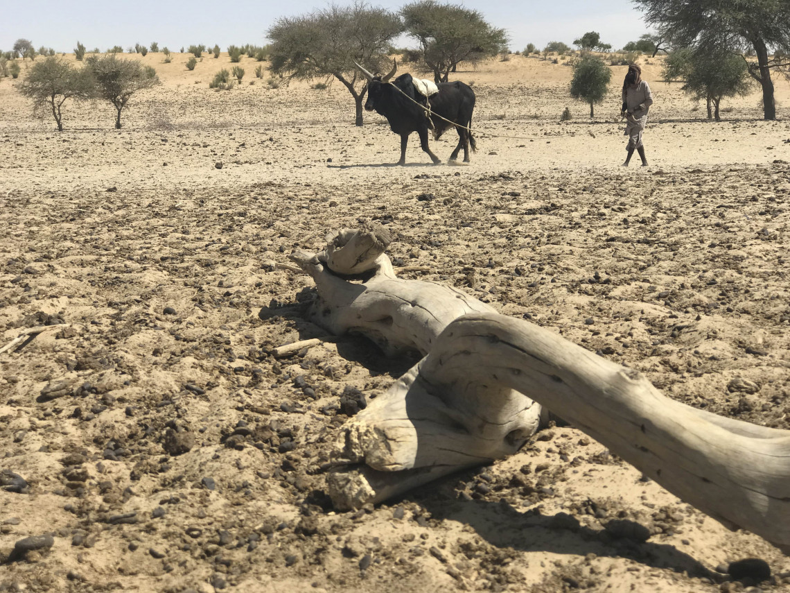 Herding in Diffa. Due to climate change, fodder for livestock is becoming scarce.