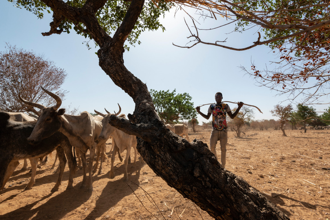 Pastures are disappearing under the combined pressure of rising temperatures and the sale of land for construction. The presence of armed groups on the traditional trans-humance paths made certain pastures inaccessible.