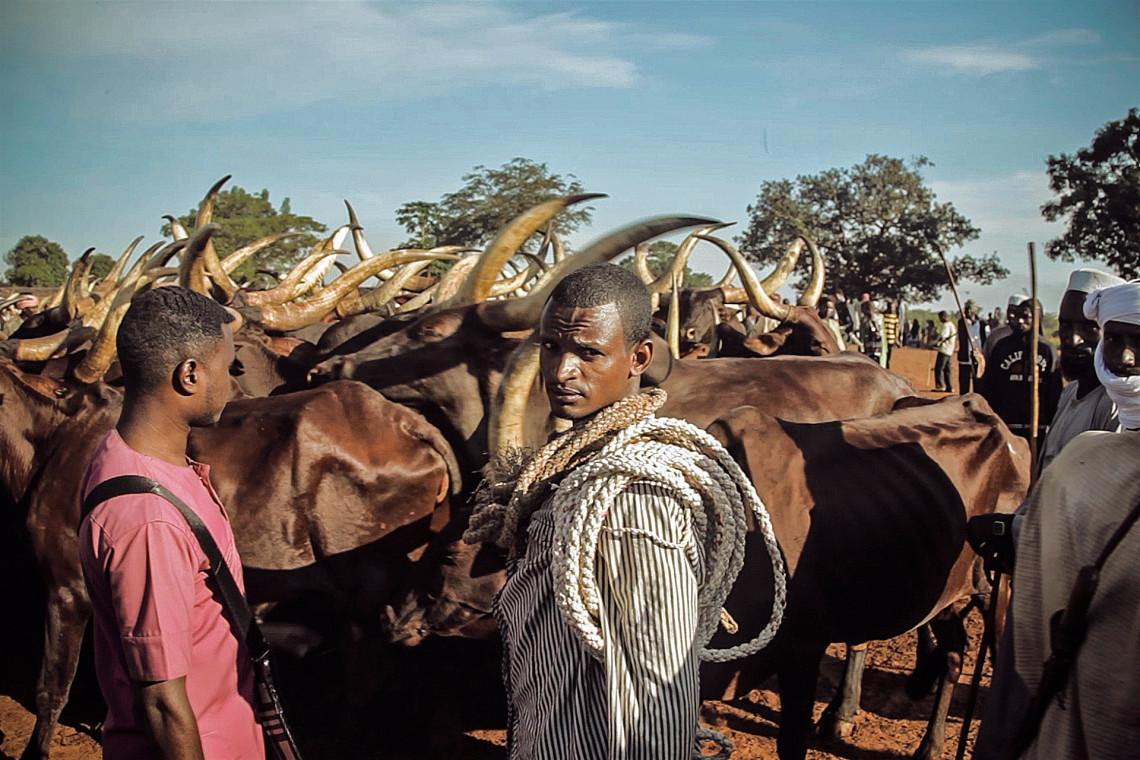 Bauern mit ihrem Vieh in der Nähe von Bambari. Infolge der steigenden Verknappung von Wasser und fruchtbarem Land kommt es vermehrt zu Streitigkeiten zwischen Weide- und Ackerbauern.