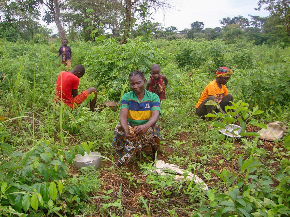 Das IKRK unterstützt Bauernverbände wie denjenigen in Gbolengapo, die sich auf Saatgutvermehrung spezialisieren.
