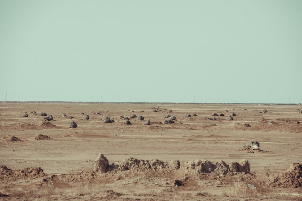 Des dizaines de palmiers abattus sont visibles le long de la route de Bassora à Fao.