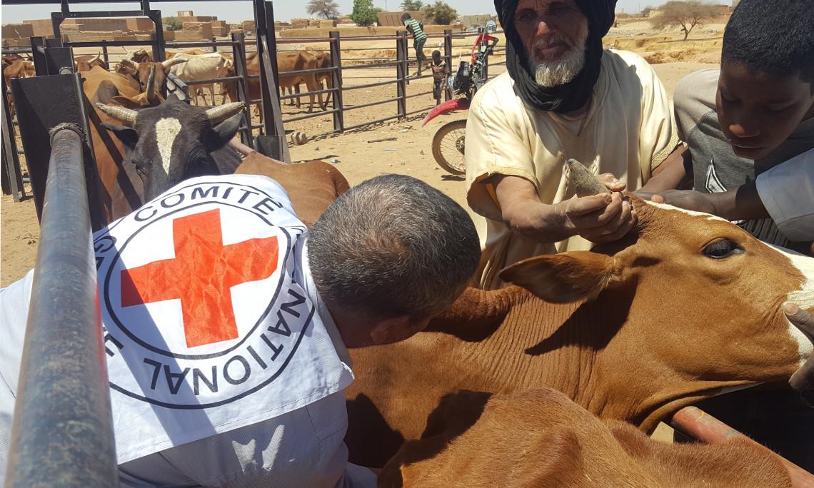 La vaccination permet de maintenir les animaux en bonne santé et d'assurer aux éleveurs une source de revenus suffisante pour garder leur mode de vie ancestral. Photo prise dans les environs de Bassikounou en 2018.