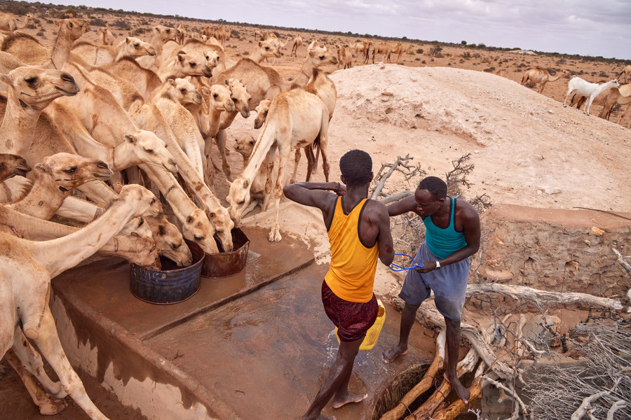 Les éleveurs doivent lutter pour préserver leur mode de vie.