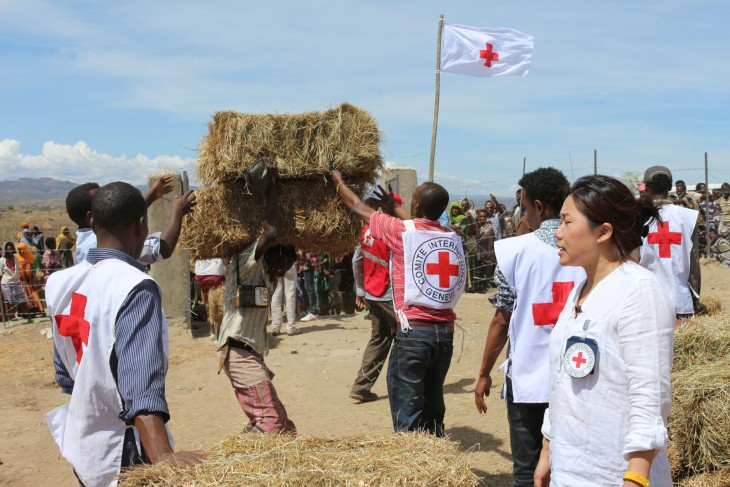 Ethiopia: Red Cross delivering hay to prevent cattle deaths