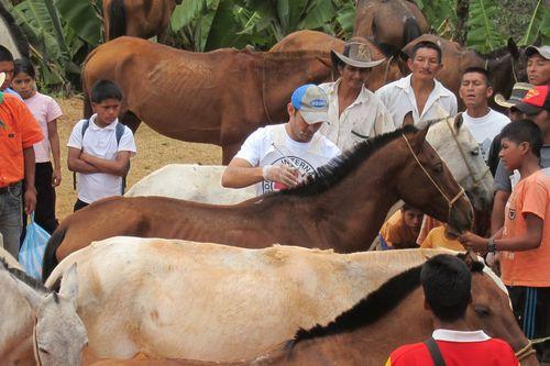 哥伦比亚 冲突地区至关重要的马和骡子